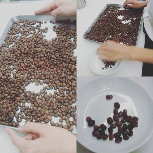 大阪-堺-北野田-喫茶店-カフェ-コーヒー豆-ハンドピック